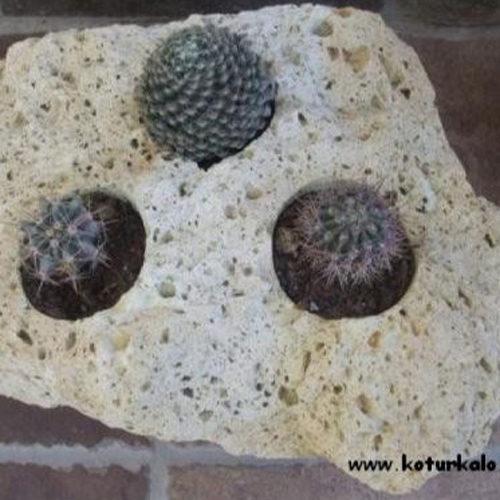 Kaktusztartó sziklából