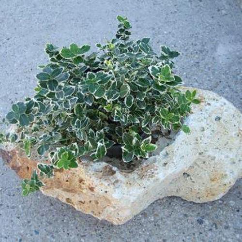 Kő virágtartó közepes méret