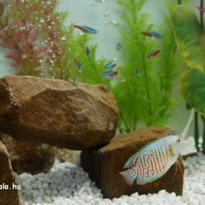akvarium-aljzat-fokep