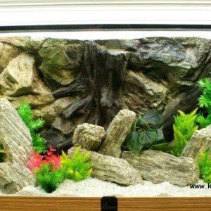 akvarium-diszkovek-fokep